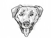 Retro Cartoon Style Drawing Of Head Of A Chinook , A Domestic Dog Or Canine Breed On Isolated White  poster