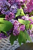 Beautiful lilac branches in a basket