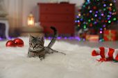 Grey Tabby Cat On Fuzzy Carpet In Room Decorated For Christmas. Adorable Pet poster