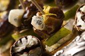 Prato de aperitivo com Dactyl, nozes Pecan e queijo