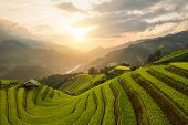 Aerial Top View Of Paddy Rice Terraces, Green Agricultural Fields In Countryside Or Rural Area Of Mu poster