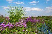 Flowering Herbs In Springtime