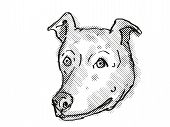 Retro Cartoon Style Drawing Of Head Of A Greyhound, A Domestic Dog Or Canine Breed On Isolated White poster