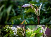 stock photo of transpiration  - small composition of lily flowers on green background - JPG