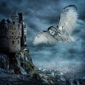 stock photo of snow owl  - Flying snow owl bird at dark night - JPG