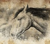 Sketch made with digital tablet, horse head