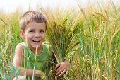 Little boy in a wheat field