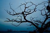 The marine tree