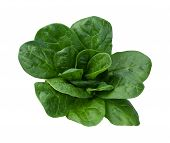 stock photo of leafy  - Spinach Isolated on a very white background - JPG