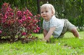 stock photo of nea  - Little baby boy sitting nea pink bush - JPG