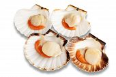 Raw Scallops (coquille St. Jacques)