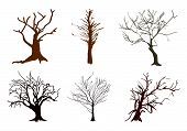 A Set Of Abstract Isometric Brown Trees