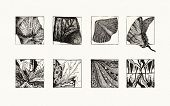 Natural Textures (ink)