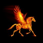 stock photo of pegasus  - Fire Pegasus in motion on black background - JPG