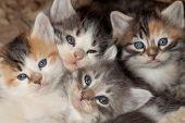 Kitten Clutter