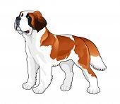 Saint Bernard. Vector isolated dog.