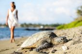 Turtle on beach. Walking woman wearing white dress in background. Sun shining in relaxed atmosphere.