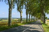 Road Near Castres (france)