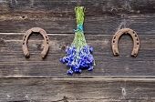 Cornflower Fresh Bunch On Wall And Two Horseshoe