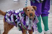 HASTINGS, ENGLAND - MAY 4: A decorated dog belonging to Morris dancers performing on the seafront during the annual Jack In The Green festival on May 4, 2013 in Hastings, East Sussex.