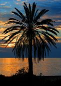 Palm Tree At Sunset...