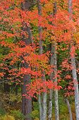 Northwoods Autumn