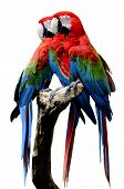 Red-and-green Macaw Parrot Bird, Green-winged Macaw Bird Sitting On The Log Together Isolated On Whi