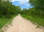 Africa, Mozambique. The Road Through The Jungle.