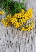 image of tansy  - Bouquet of tansy on the wooden background - JPG