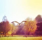 a seagull fling in a park done with a retro vintage instagram filter