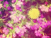 some pretty flowers done with a soft color filter