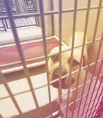 pic of stray dog  - a stray dog at the pound or shelter done with a retro vintage instagram filter - JPG