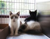 a litter of tiny kittens in an animal shelter, waiting for a home with a soft glow filter
