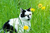 Cat Enjoys Springtime On Garden