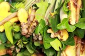 Lemongrass, Galangal, Kaffir Lime Leaves For Soup.