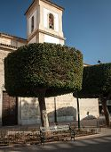 Tree in the city of Almeria