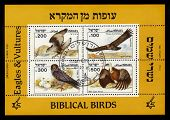 Biblical Birds - Eagles And Vultures