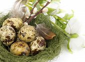 Nest with Easter quail eggs with flowers on white background
