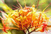 Sorrowless Tree Bloom