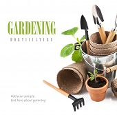 stock photo of horticulture  - Garden tools with seedlings vegetable - JPG