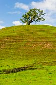 Single Tree On A Hill With Short Grass