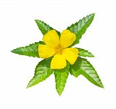 picture of sm  - Yellow flower  - JPG