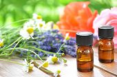 stock photo of chamomile  - aromatherapy oils with herbal flowers rose - JPG