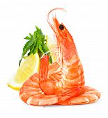 Fresh Shrimps With Lemon And Mint Isolated