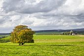 Rural Landscape With Yellow Tree On The Green Field And Cloudy Sky