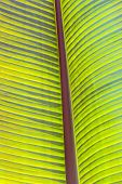 Detail Of Palm Tree