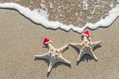 Sea-stars couple in santa hats on the sand. New Years and Christmas vacations at beach concept.