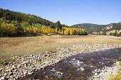 Colorado Aspens And Stream