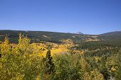 Rocky Mountain Fall Aspen Scene