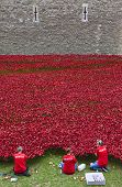 Volunteers At The Tower Of London Poppy Installation